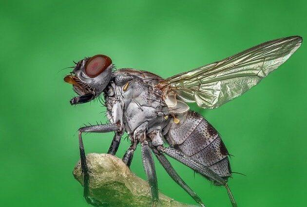 sinek kovucu ev yapımı